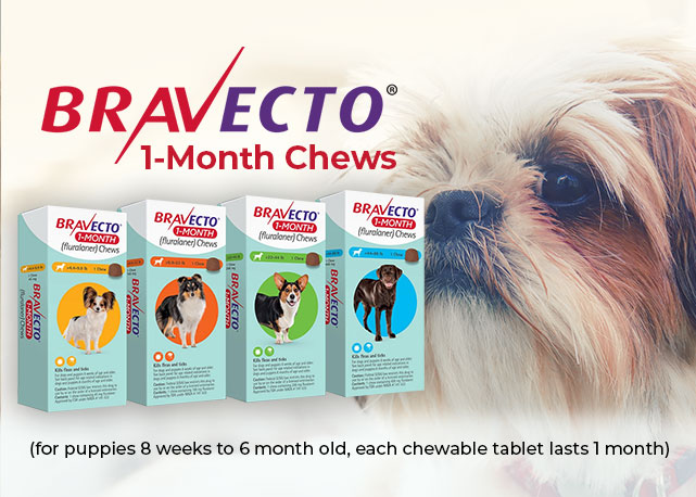 Bravecto Product