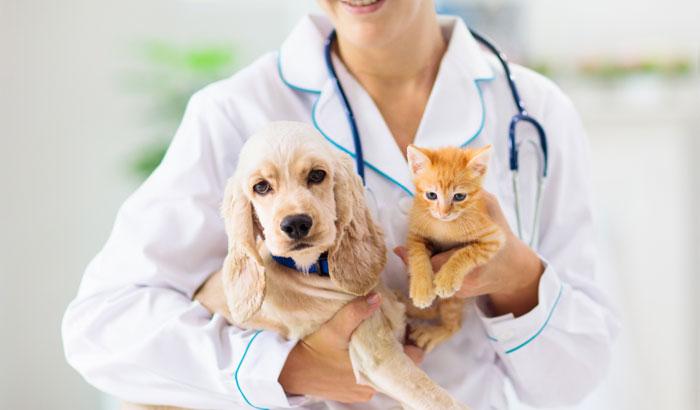 Pets Disease